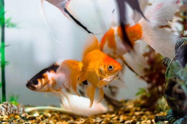 spokojené rybičky