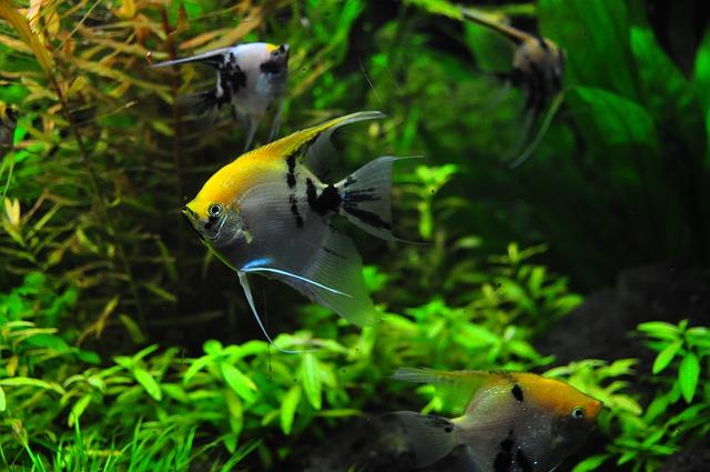 bohatá zeleň v akváriu