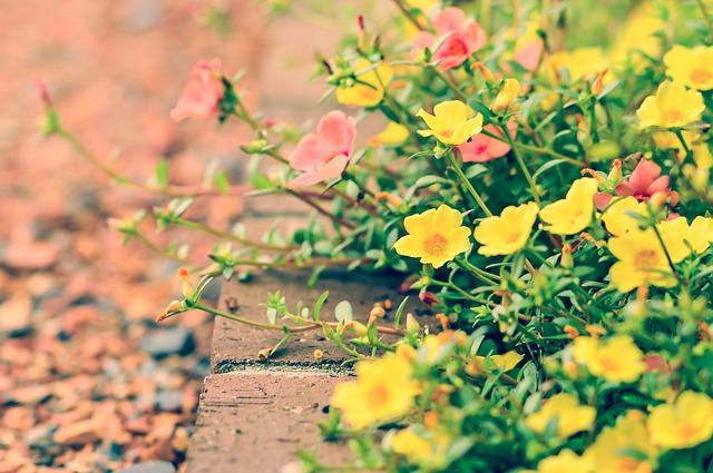 květiny u chodníku